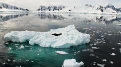 Leopard Seal sleeping on an Iceberg in Antarctica. Stock Footage