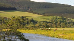 Scenic summer view overlooking the River Tweed, Scottish Borders - stock footage