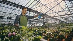 Worker watering flowers from the tables in greenhouse. RAW video record Stock Footage