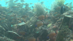 A large number of fish near a coral reef Stock Footage