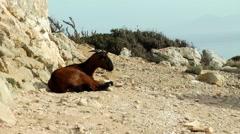 Majorca, Cap Formentor, goat Stock Footage