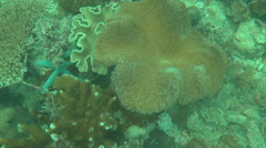 Coral carpet for the weak Stock Footage