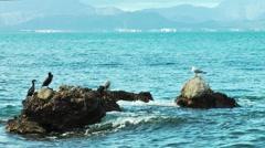 seagull and heron sitting on rocks enjoying the sun - stock footage