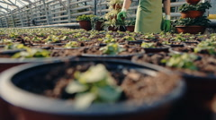 Young gardener holding a pot of seedlings in the greenhouse. RAW video record - stock footage