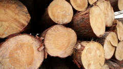 Stock timber wood industry plant Stock Footage