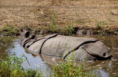 Gray rhinoceros in captivity in the hot summer - stock photo
