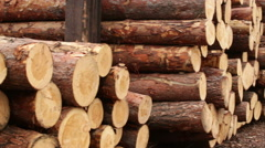 Pile of logs processing of biofuels Stock Footage