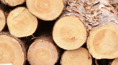 processing of tree logs video - stock footage