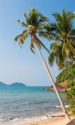Stock Photo of Coconut palm on a tropical beach