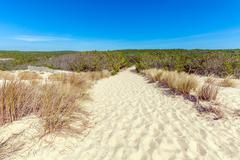 Stock Photo of Plants of Dune of Pyla, Arcachon Bay