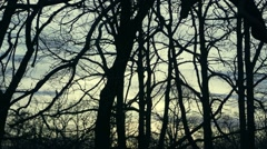 Movement in slow motion past trees and branches without leaves Stock Footage