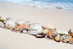 Tropical shells on a beach - stock photo