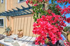 Traditional Greek house with mauve bougainvillea flowers Stock Photos