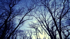 Silhouettes of trees without leaves with background movement of clouds Stock Footage