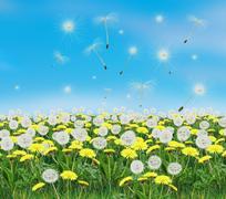 Dandelion Spring flower Piirros