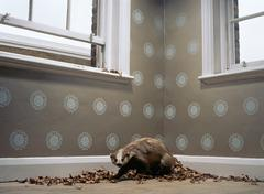 Stuffed badger with dead leaves Stock Photos