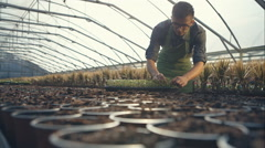 Gardeners working at the greenhouse seedlings successfully puts. RAW video Stock Footage