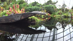 Hand-carved boat in a still pool inside the Cloud Forest Stock Footage