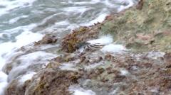 St Maarten - crab 2 Stock Footage