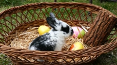 One Little bunny playing in a basket of easter eggs 4K Stock Footage