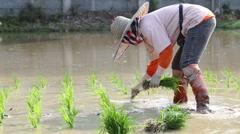 Thai farmer working plantation in the farm Stock Footage