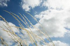 Grass blowing in the breeze Stock Photos