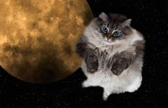 Funny cat flying in the night sky with the full moon on background Stock Photos