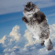 Fanny Fat Cat Levitate In Blue Sky - stock photo
