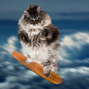 Fanny Fat Cat flying on skatebord In Blue Sky - stock photo