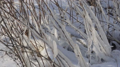 Icicles on branches and snow on the ground Stock Footage