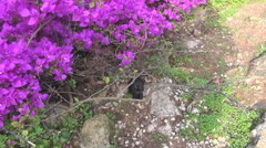 Lilac flowers and small black rabbit Stock Footage