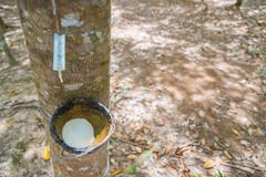Bowl for tapping latex from rubber tree with selective focus - stock photo