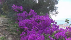 Purple flowers of the Alameda Park - stock footage