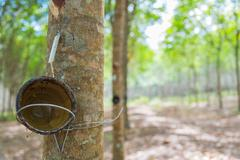 Bowl for tapping latex from rubber tree with selective focus Stock Photos