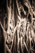 Natural pattern of roots tree with under exposure style Stock Photos