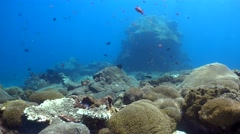 Hard and soft coral reef with huge boomie in the background - stock footage