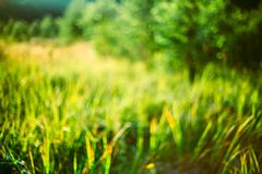 Spring Nature Green Grass Natural Blurred Absract Background. Bo Stock Photos