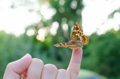 Butterfly on Little Finger Stock Photos