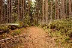 Winding path lane walkway way through beautiful coniferous autum Stock Photos