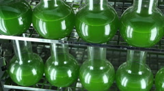 The glassware filled with green algae  horizontal  panning top view Stock Footage