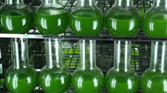 Two rows of bottles filled with green algae   panning - stock footage