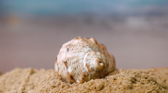 Spiral shell on the beach on a sunny day on a background of ocean waves. Closeup Stock Footage