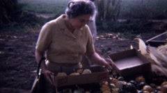 1967: Women picking gourd vegetables from roadside farmstand. - stock footage
