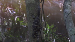 Slowmotion video of a water lizard climbing the tree Stock Footage