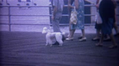 1962: Standard poodle walking down ocean beach boardwalk. - stock footage