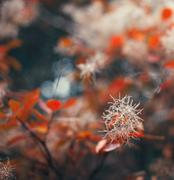 Autumn nature background with colorful leaves on branch. Soft focus Stock Photos