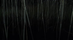 DARKNESS RIVERSIDE REEDS (SLOW MOTION) Stock Footage