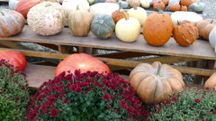 Pumpkins, gourds and flowers on a table, Thanksgiving symbols Stock Footage