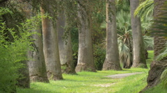 Trees in a park on a sunny day, Nice - stock footage
