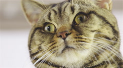 Cat wink with eye low angle closeup 4K - stock footage